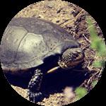 des animaux protégés tels que la cistude à voir au bord de la Leyre après avoir grimpé dans les arbres