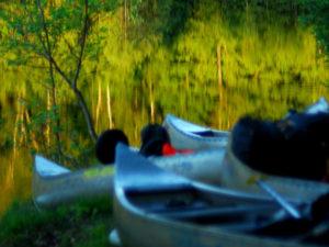 t sur leyre descente de la leyre en canoé entre bordeaux et arcachon
